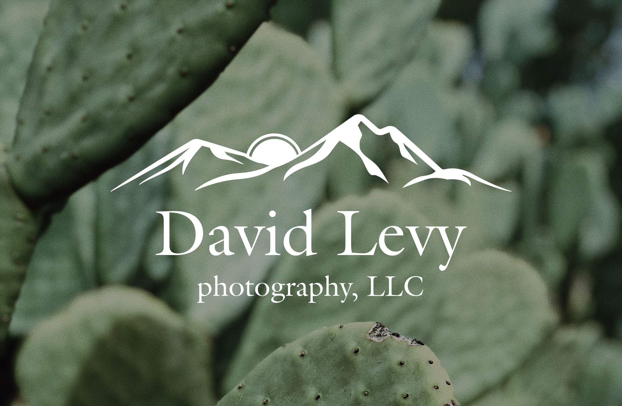David Levy Photography